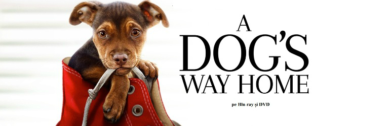 A dog's way home pe Blu-ray si DVD