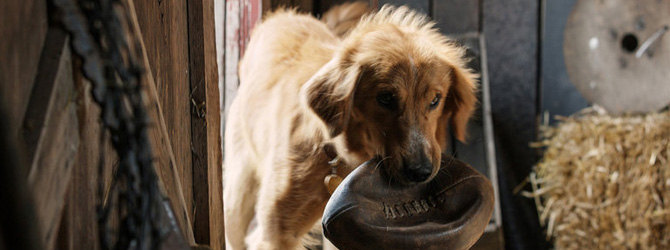 Trailer emotionant pentru A Dog's Purpose