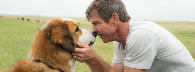 CineReview: A Dog's Purpose